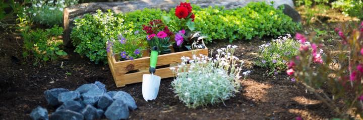 庭を作って良かった! 初心者でも簡単にできるガーデニング術